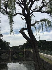 Imperial palace garden (carrieegibson) Tags: travel photography japan architecture tokyo