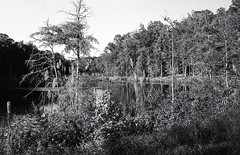 Swamp on B&W Film (Neal3K) Tags: bw blackwhite georgia jchstreetpan400 nikons335mmfilmcamera filmphotographyproject