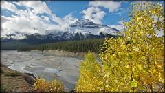 I see yellow! (Banff NP, Canada) (armxesde) Tags: pentax ricoh k3 canada kanada banff banffnationalpark rockymountains alberta mountain berg river fluss wolke cloud tree baum herbst autumn fall