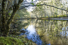 River Reflection Trees (Ken Phelps - Please See Albums) Tags: nanaimo river trees reflection
