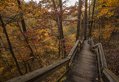 Staircase thru Fall (Bernie Kasper (4 million views)) Tags: art berniekasper bridge cliftyfallsstatepark color cliftyfalls d750 family fall hiking indiana jeffersoncounty light landscape leaf leaves love outdoor old outside madisonindiana madisonindianacliftyfallsstatepark nature nikon naturephotography new photography park raw statepark travel tree trail trees unitedstates usa staircase