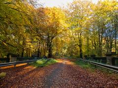 Whelley Loop line bridge, Haigh Plantations, Wigan (togwood) Tags: whelleylooplinerailwaybridge autumn haighplantations woods woodland landscape wigan