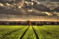 Furrows (nigdawphotography) Tags: furrows plough crop field farm arable sky light sunlight autumn prioryfarm harlow essex