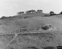 oak landscape (markjwyatt) Tags: chinohills oaks hills monochrome berggerpancro400 mamiyac330f 180mmf45 ilfotecddx greenyellowfilter