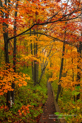 Walking into an Enchanted Forest, autumn (susannevonschroeder) Tags: minnesota colors fall forest magic northshore path trees