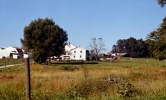 amish farm (bluebird87) Tags: amish farm dx0 c41 epson v800 film kodak ektar nikon f5