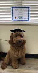 Finn graduates puppy school !!!