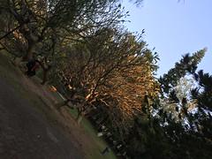 Glowing Tree (hinxlinx) Tags: shantou university tree