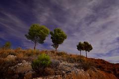 MOVIDOS POR EL VIENTO (alfredo2057) Tags: alfredo azul arbol atalaya senderismo nublado vegetacion noche nikon luz largaexposicion navarra nocturna nubes pueblo peralta planta color monte cielo otoño campo