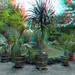 Hortus Amsterdam 3D
