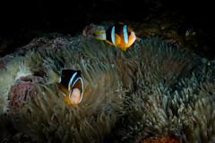 IMG_7405 (Gil Xavier) Tags: underwater scuba philippines canon fantasea g7xmk2 cebu moalbal turtlebay