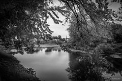 Temps pluvieux sur la Nicolet (guysamsonphoto) Tags: guysamson victo victoriaville rivière river rivièrenicolet rivièreduquébec bw noiretblanc monochrome centreduquébec