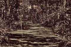 0808 01 (pni) Tags: nature park forest tree multiexposure multipleexposure tripleexposure hiidenkiukaanpuisto jätterösparken lövö lehtisaari helsinki helsingfors finland suomi pekkanikrus skrubu pni footpath
