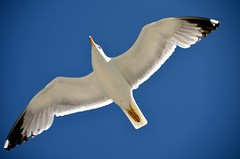 Gaviota (JCMCalle) Tags: oiseau bird ave pájaro jcmcalle photohoot fhotografy photofrapher nofilter naturaleza nature naturephotography nofilters gaviota cielo