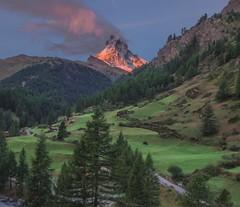 Matterhorn ZermattSunrise September (Mountain lakes dreaming) Tags: pink sunrise september valais walis switzerland suisse matterhorn cervin zermatt