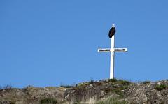 eagle on cross (tesseract33) Tags: tesseract33 nikon light world art travel d750 nikondigital peterlang comoxphotographers nikond750 peterlangphotographynet sky eagle bluesky