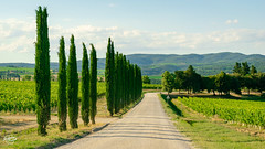 20180623-montalcino-00795_web (derFrankie) Tags: 2018 a anyvision bestofbest c f g h italien l labels m p s t v agriculture crop exported field grass grassfamily hill landscape mountscenery plantation sky tree ultraselect vineyard