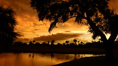 Late September Sunset (Jim Mullhaupt) Tags: sunset sundown dusk sun evening endofday sky clouds color red gold orange pink yellow blue tree palm outdoor silhouette weather tropical exotic wallpaper landscape nikon coolpix p900 pond lake water reflection manateecounty bradenton florida jimmullhaupt cloudsstormssunsetssunrises photo flickr geographic picture pictures camera snapshot photography nikoncoolpixp900 nikonp900 coolpixp900 mammatusclouds
