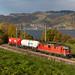 SBB Cargo Re 420 mit Rigips-Güterzug bei Kumm