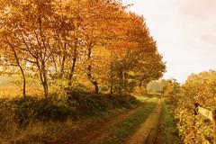 Autumn (metsemakers) Tags: ittervoort sony a7ii tamron sunrise autumn herfst