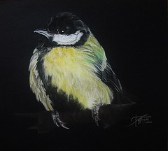 GREAT TIT (Sketchbook0918) Tags: bird avian wildlife tit great greattit pastel paper fabriano portrait drawing illustration yellow black feathers cute fluffy resting animal