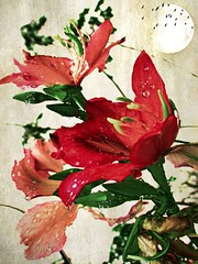blood sister (CatnessGrace) Tags: nature flowers redflowers rain raindrops red green moon birds