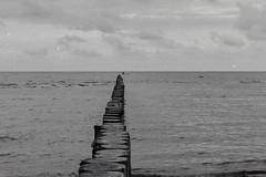 Stille See (Poel-Buhnen-Paddler) (RKE_nord) Tags: film fomapan200 analog 35mm schwarzweis blackandwhite poel mecklenburg strand buhnen ostsee