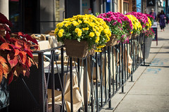 Fall Flowers on the Danforth (A Great Capture) Tags: streetphotography streetscape photography streetphoto street calle outdoor outdoors outside vibrant colorful cheerful vivid bright cityscape urbanscape eos digital dslr lens canon 70d colours colors colourful flickrtagsagreatcapture agc wwwagreatcapturecom adjm ash2276 ashleylduffus ald mobilejay jamesmitchell toronto on ontario canada canadian photographer northamerica torontoexplore fall autumn automne herbst autunno 2018