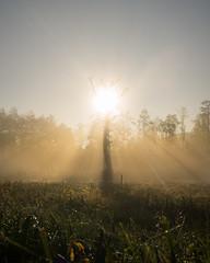 Bosch (21 of 32) (VarsAbove) Tags: kampinos kpn kampinoski park narodowy fog mist mgła morning sunrise dawn wschód polska poland łoś moose sony sonya7 a7ii coffe milkyway