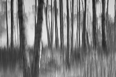 IMG_8614 Dream or reality (MariuszWicik) Tags: lines blur autumn birch canoneos5dmarkii lens view image poland polska
