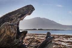 Mountain roots. (Sean Hartwell Photography) Tags: fenit kerry countykerry ireland beach seaside sea tree roots flotsam jetsam seaweed atlantic ocean mountains bluesky
