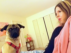 9-28-18 (Patty_King444) Tags: pug animal