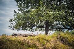 Het Groote Zand in Hooghalen (Gerrit Veldman) Tags: drenthe dutch grootezand holland hooghalen middendrenthe nederland netherlands boom tree log stam heide heath sky lucht olympus epl7