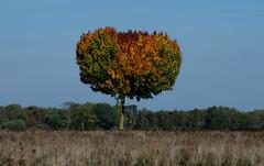 ##herbstfarben (ThorstenWiggers62) Tags: herbst autumn fields timeless landart colours