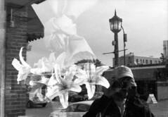 untitled (kaumpphoto) Tags: mamiya nc1000s kodak 3200 bw black white glass window reflection flower ligh street urban city minneapolis selfportrait