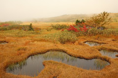 Wetland in autumn (Teruhide Tomori) Tags: landscape nature mountain japan japon tateyama toyama 中部山岳国立公園 立山 富山 日本 北陸 自然 風景 立山黒部アルペンルート 弥陀ヶ原 秋 autumn tree grass forest midagahara wetland highland chubusangakunationalpark tateyamakurobealpineroute fog sunset light 高層湿原 霧