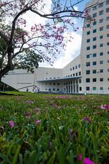 Green School Bloom (fiu) Tags: fiu schoolofinternationalaffairs university sipa mmc campus green miami florida international em