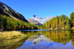 Palpougnasee im Herbst (barbarasteinemann) Tags: herbstfarben herbst berge graubünden preda albulapass albula palpuognasee swisslake lake schweiz suisse swiss swissalps