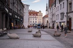 2018_1019F-0248 (Andrey.Illarionov) Tags: eesti estonia tallinn европа таллин эстония