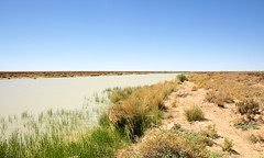 SOME WATER AND THE ODD SIGN OF WILDFLOWER (16th man) Tags: birdsville birdsvilletrack queensland southaustralia canon eos eos5dmkiv lake tippipila