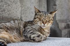 Cementerio de la Recoleta (triniquito) Tags: buenosaires argentina sudamerica cementerio larecoleta cemetery gato cat sleep