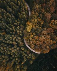 Autumn festival (desomnis) Tags: dji drone dronephotography forest path forestpath autumn autumnal autumncolors nature naturephotography aerialphotography aerial trees deciduousforest deciduoustrees deciduouswood desomnis