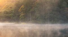 Knapps Loch (chrismarr82) Tags: knapps loch scotland nikon sunrise tree mist