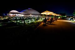 山口ゆめ花博-1000万の花夜景 #1ーYamaguchi Yume Flower Expo - 10 million flowers Night view #1 (kurumaebi) Tags: yamaguchi 阿知須 山口市 nikon d750 山口ゆめ花博 夜 night yamaguchiyumeflowerexpo