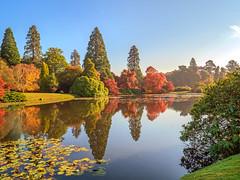 Sheffield Park (niloc's pic's) Tags: reflections trees autumncolour autumn lake water waterlilies colours sheffieldpark nationaltrust eastsussex panasonic lumix dmcgh4r