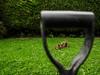 Garden Pest (Cagey75) Tags: panaleica15mm g80 enticingimagery digging cat pest grass lumix panasonic