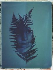 Blue Fern (Maija Karisma) Tags: polaroid instant pola littlebitbetterscan graflex growngraphic doubleexposure 559 peelapart 4x5 largeformat expiredfilm nature