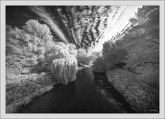 Laowa 10-18mm f/4.5-5.6 FE Zoom @ 10mm prototype on Sony A7R infrared (Dierk Topp) Tags: a7r bw bäume ilce7r ir laowa1018mmf4556fezoom clouds infrared monochrom sw sony superwide trees ultrawideangle wideangle