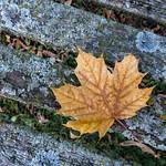 Autumn in the park - Automne dans le parc thumbnail