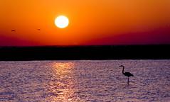 Sunrise in Camargue (paolo_barbarini) Tags: flamingo camargue fenicotteri alba sunrise wildlife landscapes birds sunset